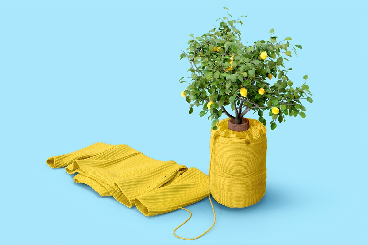 Lemon tree and garment with blue background